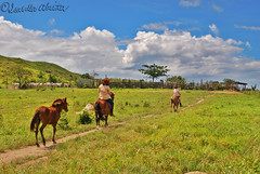 Way of Life (Bella Abelita) Tags: cattle philippines capital livestock masbate