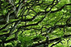 Hawaiian Rainforest (bior) Tags: hawaii rainforest oahu 85mm 70300l ef70300mmf456lisusm rebelt3 canoneosrebelt3