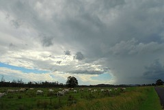 Storm chasers (dustaway) Tags: storm nature animals clouds landscape countryside scenery day cattle australia pasture nsw cloudscape ruralaustralia northernrivers rurallandscape richmondvalley pelicancreek afternoonlandscape wilsonsrivervalley