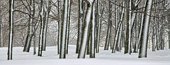 Snowfall (Pavel K) Tags: wood winter snow forest russia moscow snowfall kolomenskoye nikond7000 photographyforrecreation rememberthatmomentlevel1