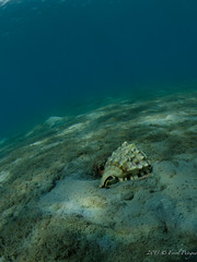DSC_7942 (eputigna) Tags: ocean blue beach water mar fishing nikon florida palm atlantic tokina freediving housing fl breathe pesca hold apnea océano submarina 1017mm subaquea d7000 nauticam