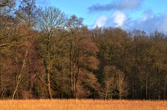 Das stille Haus im Wald (Sunstonecruiser) Tags: wood trees winter light sun abstract color art nature grass sunshine outdoors deutschland licht landscapes countryside oak eiken bomen europe view january wiese dramatic natuur surreal hills grasses agriculture sunlit landschaft wald cloudysky weiland landschap badbentheim luchten eiche kleur wheatfield bentheim bossen spazieren broekland struiken deutscherwald heuvellandschap northwesteurope waldlandschaft graser landscapedreams obergrafschaft europeanlandscape marchen deutschelandschaft grafschaftbadbentheim brookwiesen
