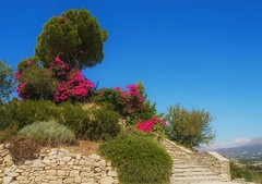 stairs, bushes and a tree (try...error) Tags: crete kreta flowers view vacation blue sky blume himmel blau flower summer green stone bush