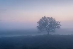 Hallickshole Hill (Stu Meech) Tags: the new forest sunrise mist fog lone tree hallickshole hasley enclosure nikon d750 24120 lee filters stu meech