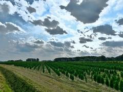 Landschap -(4)- Lede (Johnny Cooman) Tags: lede vlaanderen belgi bel belgium belgia belgien belgique blgica flandern flanders flandes flandre flhregion flemishregion  eastflanders oostvlaanderen aaa natuur panasonicdmcfz200 wolk wolken wolkformatie wolkformaties cloudscapes nuages boom arbre tree baum bos landschap landscape