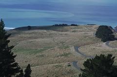 Windy road (Kiwi Jono) Tags: port hills summit road christchurch windy fields sea trees rule threes pentax pentaxk5 samyang85f14