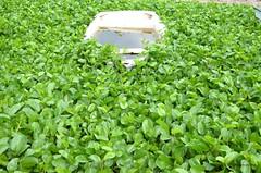 Nature reclaiming (S. Alexis) Tags: mexiko mxico mexico mazatln sinaloa nikon d5100 green verde panga lancha boat