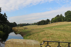 IMG_4719 (alicemaryfox) Tags: yorkshire sculpture park kaws henri moore cattle sheep art discovery water bridge stately home national
