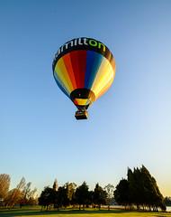 Hamilton: City of Balloons (ajecaldwell11) Tags: ankh balloon caldwell dawn hamilton innescommon lakerotoroa sky sunrise trees