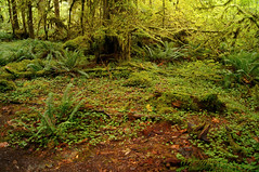 Carpet of Green (Anomieus) Tags: trees olympic green white creek river serene stream forest woods nature natural water landscape outdoor waterfall washington washingtonstate olympicpeninsula moss fort trail rain nationalpark temperate september 2016 hohrainforest hoh hallofmosses wald foresta bosque  skgur bos pyll   me baso    uma  bosc lasang  les skov arbaro mets neverstopexploring olympicnationalpark
