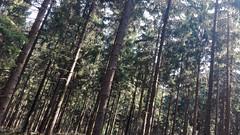 IMG_20160924_131949 (FranktIstAuchNurEinName) Tags: nature natur wald woods forest trunk trunks treetrunks wood woodland