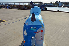 Skipper-I-17-September-2016 (Steve Ellwood Whitley Bay) Tags: greatnorthsnowdogs guidedog mikeclay northshields cliffordsfort ellwood steveellwood skipper joannewishart dfds westernquay fishquay