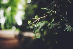 Foliage (Digic-Vision) Tags: canon 6d sigma 35mm 14 art foliage dof vsco