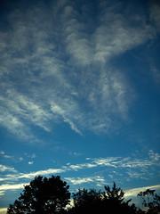 CF002426 (Paul Henegan) Tags: mamiya645afd mamiyasekorc7028 clouds earlymorninglight f40 silhouettes treeline