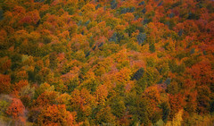 Autumn Colours (Explored) (David J. Julin) Tags: forest arboles autumn espaa otoo davidjjulin fall bosque colores orange colours