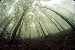 Lost In The Wild (Midnight - Digital) Tags: wood trees mist forest giant lost mood perspective atmosphere lowangle