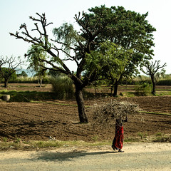 India-251 (johnmontague) Tags: india asia geography rajasthan nationalgeographic