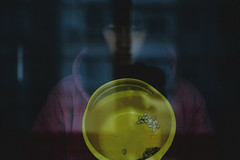 59/365 Pumpkin seed (ㄇㄠ) Tags: portrait woman reflection glass girl yellow self canon pumpkin dad balcony grain seed story 5d about 365 cinematic f28 2470mm