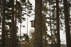 Day 346 - Birdhouse Profile (dennisdasfoto) Tags: trees winter oneaday pine forest vinter sweden schweden birdhouse skog photoaday tall sverige kiefer wald bume trd scots pictureaday vogelhaus kristinehamn project365 fgelholk