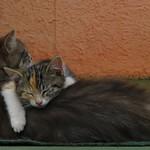 Abrazo de gato thumbnail