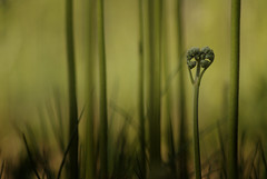 Undergrowth (Photambule) Tags: fern green heart sony coeur vert vegetal fougres underbrush sousbois vgtaux