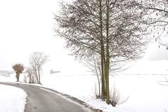 Bayern... (izoll) Tags: schnee winter bayern nebel outdoor sony baum klte schneelandschaft strase landstrase nebelstimmung alpha580 izoll