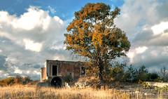 bellezza decadente (invitojazz) Tags: autumn tree nikon albero autunno decadent masseria d90 decandente statte invitojazz vitopaladini