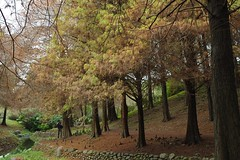 Bald Cypress Woods 1 (diclin) Tags: trees woods cypress