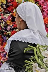 Silletera (Jorge Gaviria) Tags: flores colombia retrato medellin sudamerica antioquia suramerica feriadelasflores suramrica silletas silletera silletero campesinocolombiano