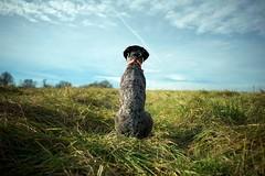 End Of The Year (MilkaWay) Tags: field grass georgia birddog athens pasture tessa land gsp germanshorthairedpointer 4yearsold clarkecounty