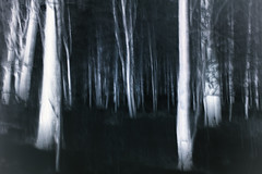 Dark woods I (FineartPhotoshots) Tags: wood trees winter blackandwhite snow motion nature monochrome forest landscape helsinki artistic negative icm alder lauttasaari intentionalcameramovement