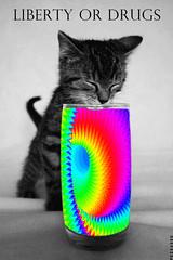 drug_kitty_tx_folks_gif (Schabrazze aka Peekasso) Tags: art blog lol kunst internet kitty online drug gif cyber netart fecalface peekasso gifart