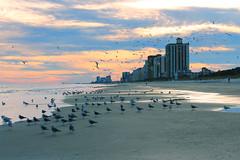 5 / 365 (studioei8htzero.com) Tags: ocean travel sunset seagulls beach birds coast southcarolina hotels atlanticocean