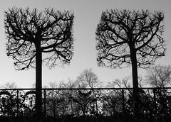 Separated by scissors (:Linda:) Tags: two sky tree castle love silhouette germany garden square town thringen decoration thuringia banister railing baum baretree dornburg thuringian twocolors bicolored cloudlesssky dornburgerschlsser