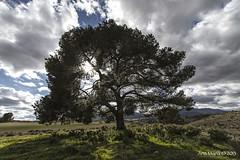 Supervivencia (Gonzalo y Ana Mara) Tags: sol anamara paisaje nubes campo pino canonefs1022f3545usm canoneos7d gonzaloyanamara