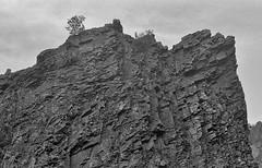 Precipice (Tantivy_J) Tags: analog texas roadtrip geology westtexas nondigital nikonfe bigbendnationalpark 1990s americanwest bigbend riogrande blackandwhitephotography filmphotography usnationalparks blackandwhitefilm scannedfromnegative chihuahuandesert chisosmountains texasdesert limestonecliffs blackandwhitelandscape americandesert texasmexicoborder weatheredrock usborders