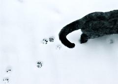 Paw Prints in the Snow (Lou Morgan) Tags: uk england snow london cat paw kitten prints snowfall