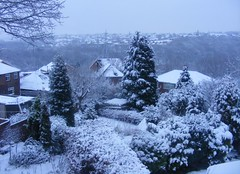 All white (leedslily) Tags: roof winter sky white house snow tree garden leeds hedge shrub kirkstall