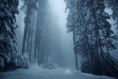 The forest (..axinha**) Tags: california travel white snow holidays sequoianationalpark allrightsreserved axinha gracielavilagudin