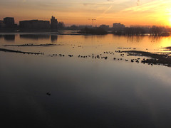 Calmness and light (Wilma1962*) Tags: birds sunrise river flood vogels ijssel rivier zonsopkomst hoogwater mygearandme mygearandmepremium mygearandmebronze mygearandmesilver mygearandmegold mygearandmeplatinum mygearandmediamond