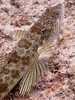 """Sand Diver • <a style=""""font-size:0.8em;"""" href=""""http://www.flickr.com/photos/45090383@N06/8412515290/"""" target=""""_blank"""">View on Flickr</a>"""