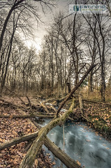 Beyond the Edge (MattPenning) Tags: trees winter tree ice leaves creek leaf woods pentax bare branches roots sigma potd trail k5 springfieldillinois washingtonpark mattpenning kmount sigma1020mmf456exdc mattpenningcom penningphotography justpentax pentaxk5