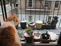 Oliver Loves Snow! (Kristine Paulus) Tags: cats oliver fireescape urbangardening fireescapegarden