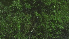 Bush (maximus_chatsky) Tags: light green rain wall night fence garden dark botanical flow video bush branch empty sound slideshow