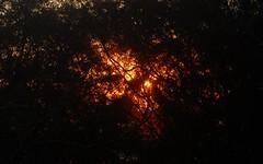 sunset (dustaway) Tags: tamborinemountain sequeensland queensland australia sunset thicket lastlight