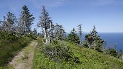 Back Trail DSL9174 (iloleo) Tags: landscape scenic novascotia trees spruce capebretonhighlandspark trail nature atlantic nikond7000