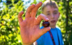 Cherry Picking (Wolfman_3000) Tags: cherry farm portrait outdoor fruit bokeh sun sunshine tree cherrypicking people