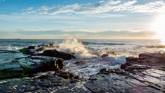 P1140560 (Pursuedbybear) Tags: alexandraheadland sunshinecoast beach sunrise waves