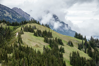 Alpine Meadows and Forest