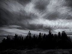 cloudy day (marianna_a.) Tags: p2750729 skerwink trail coast east canada newfoundland trees wind bw monochrome landscape mariannaarmata